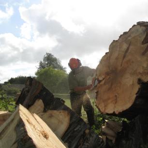 Felling large horse chestnut in Headley, Surrey