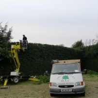 Reducing conifer hedge at Cowfold, West Sussex