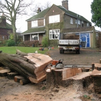 Sectional fell of conifer tree in Cuckfield, Sussex