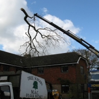 Craning oak tree safely over house at Ditchling, East Sussex