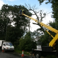 Removing dead oak tree over powerline using cherry picker at Sayers Common, Mid Sussex
