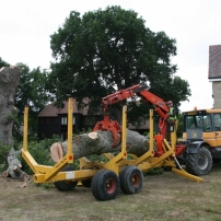 Transporting tree trunk to local Sussex timber yard