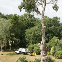 Large oak tree removal at Henfield, West Sussex