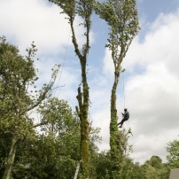 Removing dangerous trees, Sussex