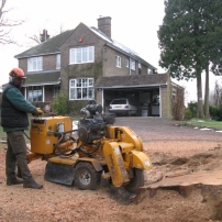 Stump grinding of conifer tree in Cuckfield, Sussex